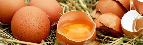 huevos de campo