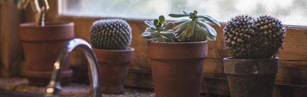 cactus y suculentas en una ventana de cocina