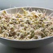 ¿Cómo puedo preparar los germinados?
